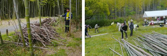 竹林の整備及び竹の伐採