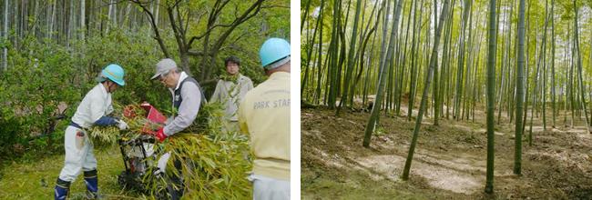 竹粉砕の様子。伐採後は日の当る竹林に