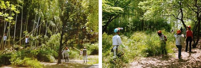 竹林の整備及び竹の伐採1