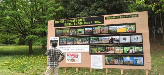 竹林の整備及び竹の伐採2
