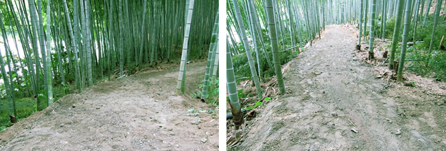 竹林整備で散策道2