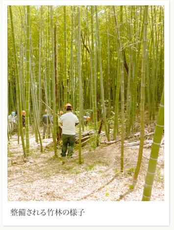整備された竹林の様子