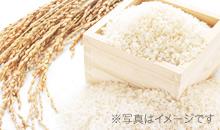 竹かぐや白米
